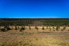 Trees Plantations Young Mature  Royalty Free Stock Photos