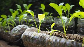 Trees are planted in recycled plastic bottles. Planted in a bottle. Plastic recycle. royalty free stock photo