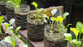 Trees are planted in recycled plastic bottles. Planted in a bottle. Plastic recycle. royalty free stock photography