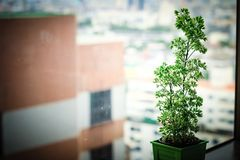Trees planted. In the building Royalty Free Stock Images