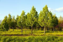 Trees Planting Royalty Free Stock Photos