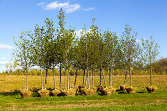 Trees Planting Stock Images