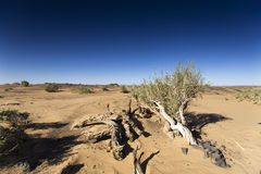 Trees and plants on the desert stock photo