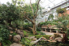 Trees and plants inside a greenhouse in the Gothenburg botanical garden, Sweden Royalty Free Stock Photo