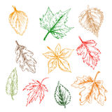 Trees and plants leaves pencil sketch set Royalty Free Stock Images