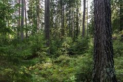 View of a forest in Finland Royalty Free Stock Images