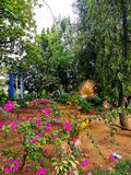 Trees and plants planted to control global warming in India royalty free stock photography
