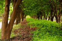 Trees and Plants in a row Stock Photos