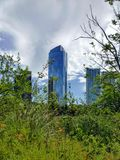 Trees and plants with skyscrapers in the background in Buenos Aires, Argentina. Stock Photo
