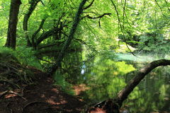 Trees in Plitvice national park croatia Stock Image