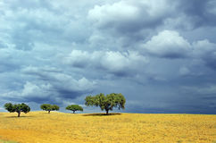 Trees on plowed field Stock Image