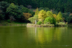 Trees in the pond Royalty Free Stock Photos
