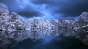 Trees on the pond. Stock Photo