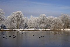 Trees with pond landscape in winter, Germany Royalty Free Stock Photo