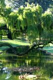 trees and pond in park Stock Photo