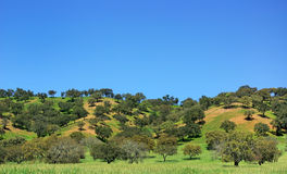 Trees at portuguese field. Stock Image