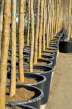 Trees and pots. Tree and pot soil plastic Stock Image