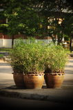 Trees in pots stock photography