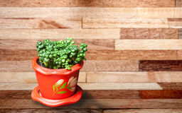 Trees in pots. Trees in red pots on wood background stock photos