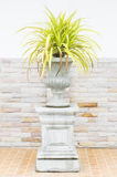 Trees in pots and stone wall Royalty Free Stock Image