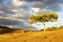 Trees on the prairie Royalty Free Stock Photography
