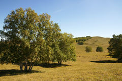 Trees on the prairie Stock Photography