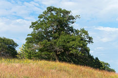 Trees and Prairie in Chaska Stock Photo