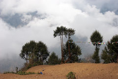 Trees with prayer flags, Everest trek, Nepal Stock Photos