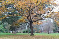 Trees in a park in autumn. Trees in a public park in autumn stock photography