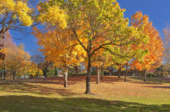 Trees in a public park in full colors. Stock Photography