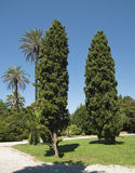 Trees by the Public Park of Rapallo Stock Photography