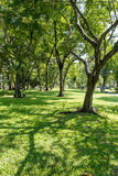 Trees in public park Stock Photography
