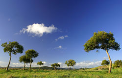Trees at Pukekohe. New Zealand an hour before sunset stock image