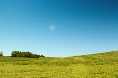 Trees in pure meadow Stock Photography