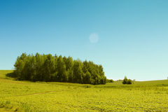 Trees in pure meadow Stock Photo