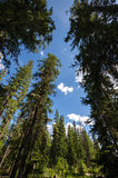 Trees on Pyramid Lake Stock Photos