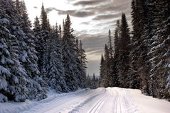 Trees in Quebec. Trees covered by snow during the winter in a cross-country skiing resort in Quebec, Canada Royalty Free Stock Image