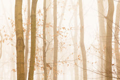 Trees quickly disappearing Royalty Free Stock Photography