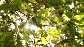 Trees in the rain forest with sunlight, Doi inthanon national park chiangmai Thailand.  stock video footage