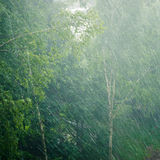 Trees in the rain Stock Images