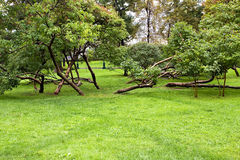 Trees after rain Stock Photo