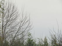Trees in a rainy day Royalty Free Stock Images