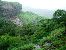 Trees in rainy valley. Scenic view of wet trees in rainy valley landscape Stock Photo