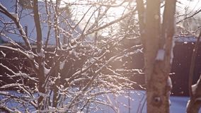 Trees in the rays of winter sun. Hd stock video