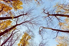 Trees reach to the heavens Royalty Free Stock Photos