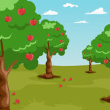 Trees with red apples in orchard Stock Image