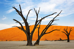 Trees and red dunes in the Dead Vlei, Sossusvlei, Namibia. Concept for travel in Africa royalty free stock images