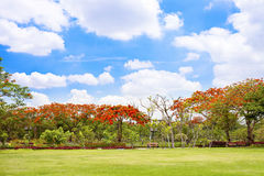 Trees and red flower and grass field with blue sky Royalty Free Stock Image