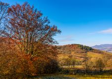 Trees with red foliage in autumnal countryside Stock Photography