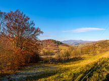 Trees with red foliage in autumnal countryside Royalty Free Stock Photography